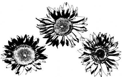 Free Vectors: Sunflowers