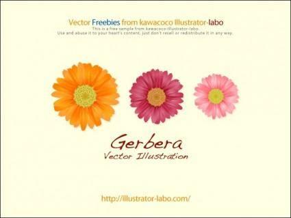 free vector Gerbera