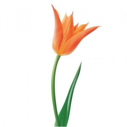 free vector Orange Tulip