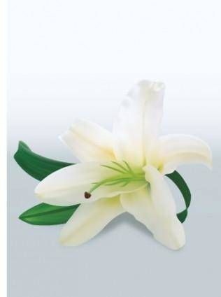 free vector White Lily