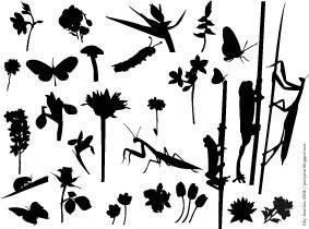 free vector Flowers & Insects