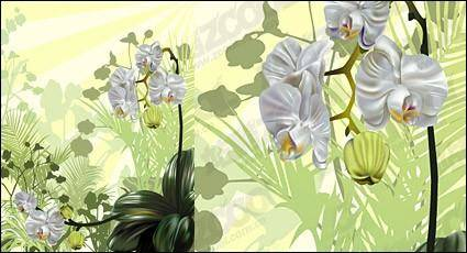 Orchid vector illustration material