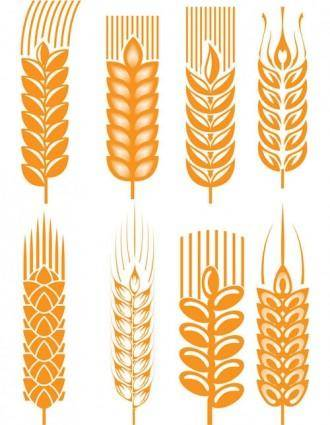 Wheat 03 vector