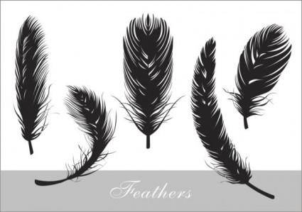 Feathers realistic silhouette vector