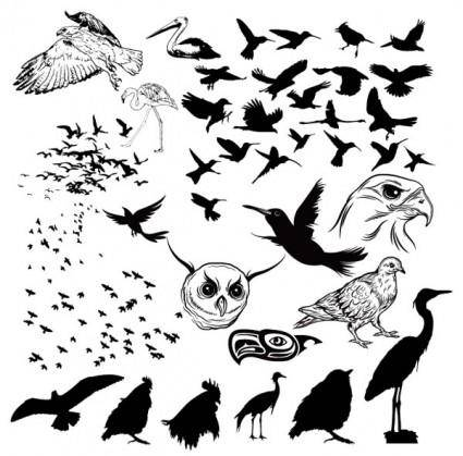 A variety of birds and silhouette vector