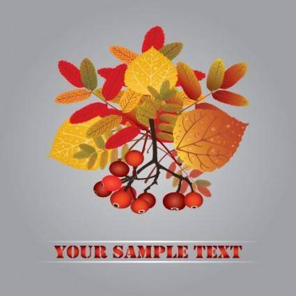 Autumn fruit autumn leaves 01 vector