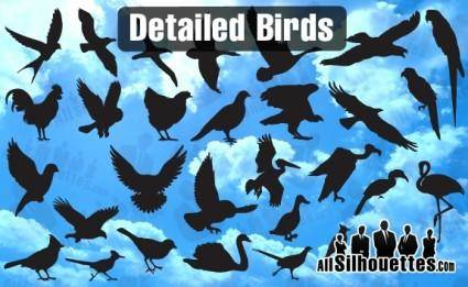 free vector Detailed Vector Birds