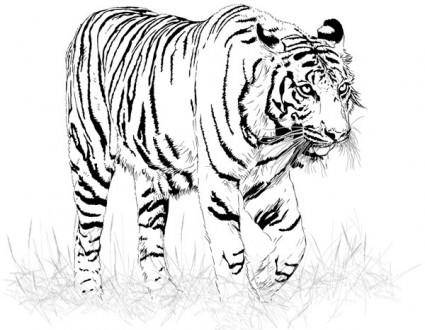 free vector Black and white tiger vector