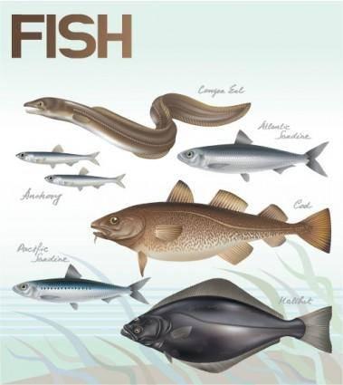 Fish 02 vector