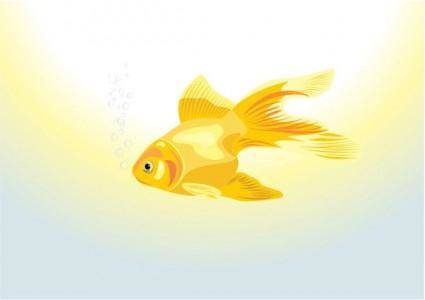 Goldfish vector 1