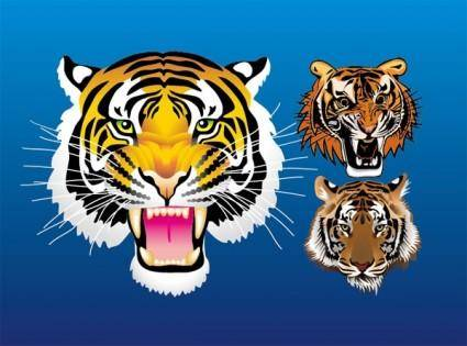 3 tiger head vector