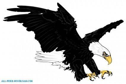 Bald Eagle 00125