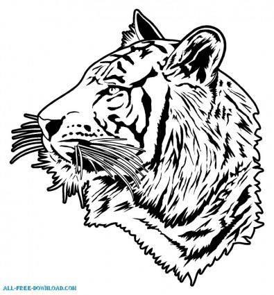Tiger 00674