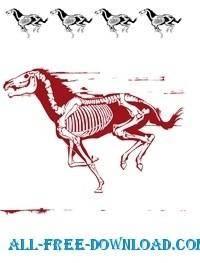 Horse silhouette skelett stencil