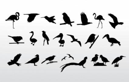 Birds Collection