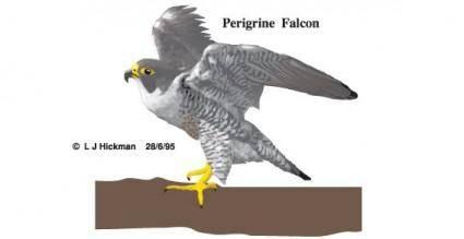 free vector Bird