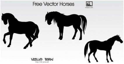 free vector Horse