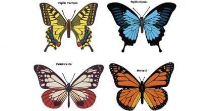 free vector Butterflies free vector