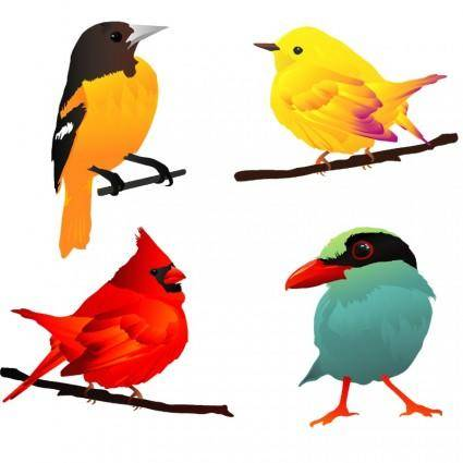 4 beautiful birds