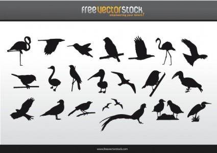 Collection of Birds Silhouettes