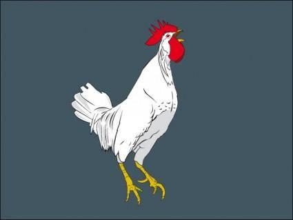 free vector Cock