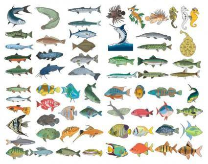 free vector A variety of fish vector