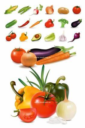 Vector of common vegetables