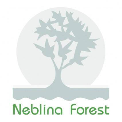 Neblina forest