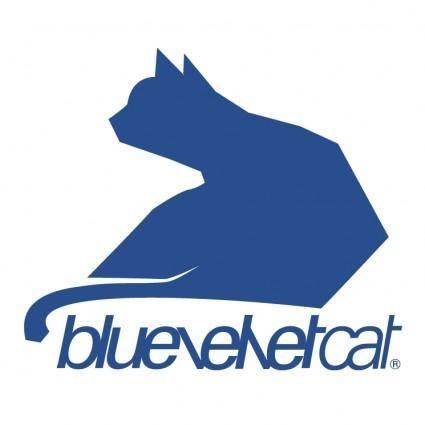 Bluevelvet cat