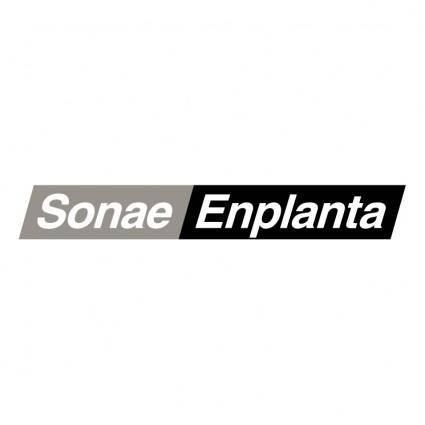 Sonae enplanta