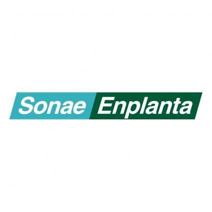 Sonae enplanta 0