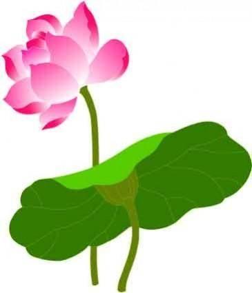 free vector Lotus vector