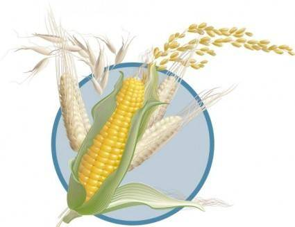 free vector Corn wheat vector