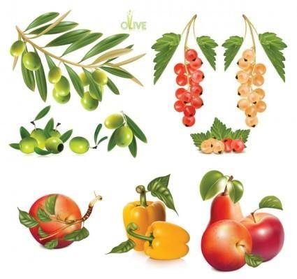 free vector Several fruits vector
