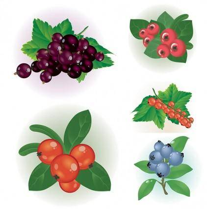 Small red berries clip art