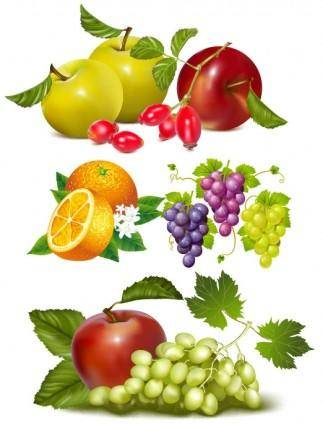 Fruits vector 4277