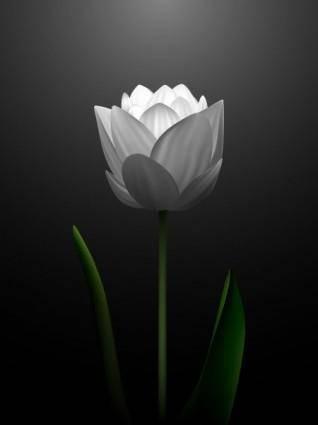 free vector White tulips vector 2