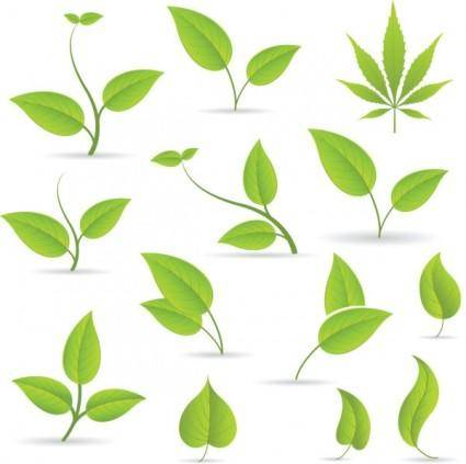 free vector Leaf 01 vector