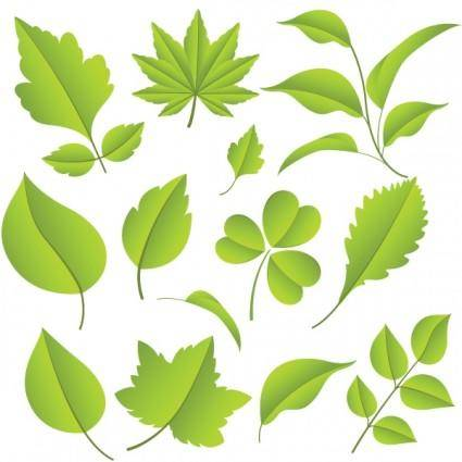 free vector Leaf 02 vector