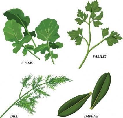 free vector Herbal leaves 02 vector