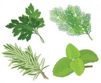 free vector Herbal leaves 04 vector