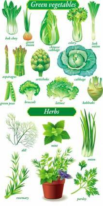 Delicate green vegetables vector