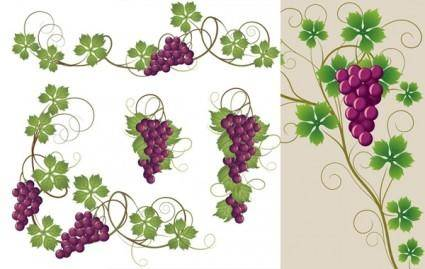 Purple grapes and grape leaves vector
