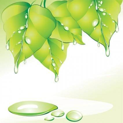 free vector Vector leaves drops