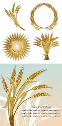 Golden wheat vector