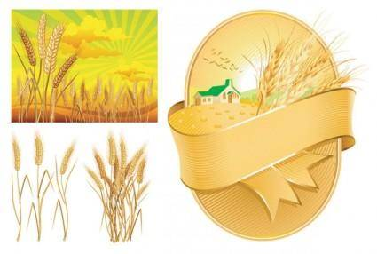 free vector Wheat theme vector