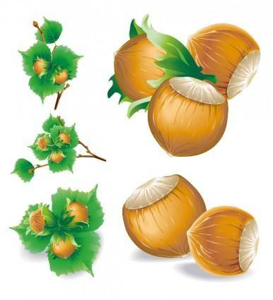 5 chestnuts vector