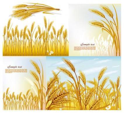 free vector Wheat vector