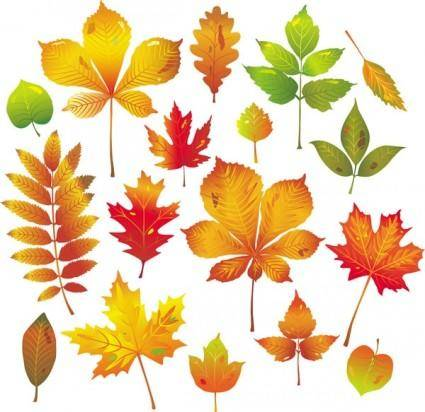 free vector Autumn leaves vector
