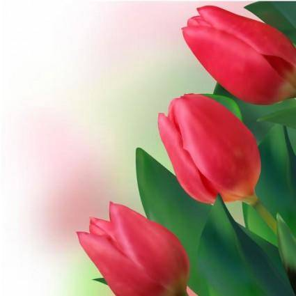 Bright tulips 02 vector